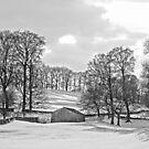 Wharfedale winter trees  by Rebecca Mason