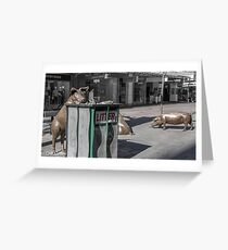 Rundle Mall - Rundle Mall Pigs   Greeting Card