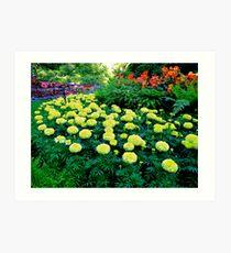 Formal gardens Art Print