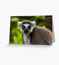 Lemur portrait Greeting Card