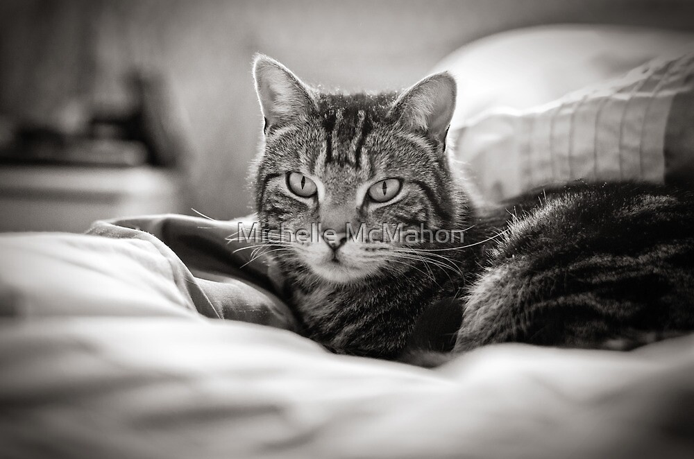 Tabby Cat by Michelle McMahon