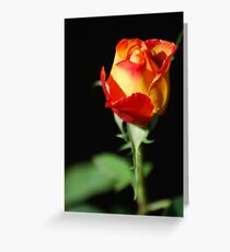 Fiery Rose Greeting Card
