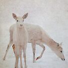 Deer in the Snow by pahit