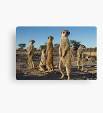 Meerkat morning Canvas Print