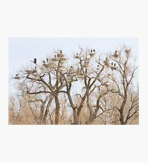 Great Blue Heron Hangout Photographic Print