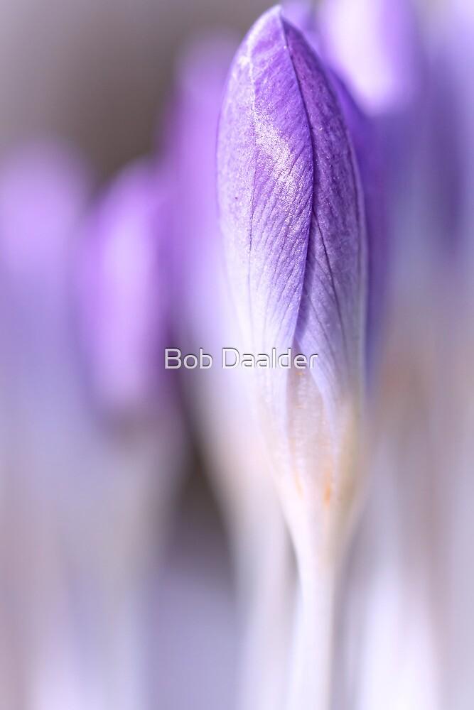 A new beginning....(II) by Bob Daalder