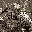 Panthera pardus pardus by Olwen Evans