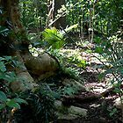 Jurassic Park ?..........No, my garden ! by Roy  Massicks