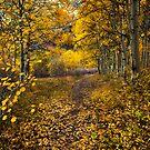 Golden Trail by Thomas Dawson