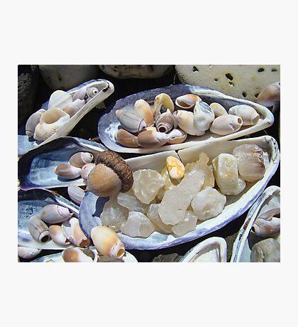 AGATES Rocks Art Prints Sea Shells Coastal Photographic Print