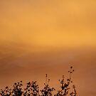 my backyard sunrise by R-Summers
