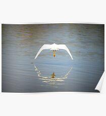 Snowy Egret ~ Farewell Flight Poster