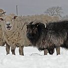 The Black Sheep Of The Family by Barrie Woodward