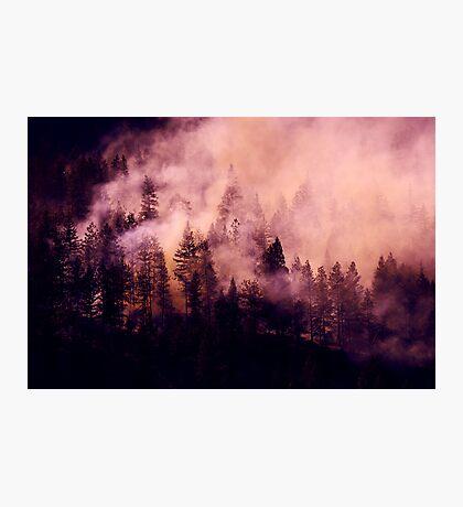 Purple Haze Photographic Print