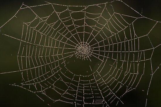 Spider art by Vikki Shedden Photography