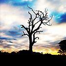 Shadow Tree by Josh Prior