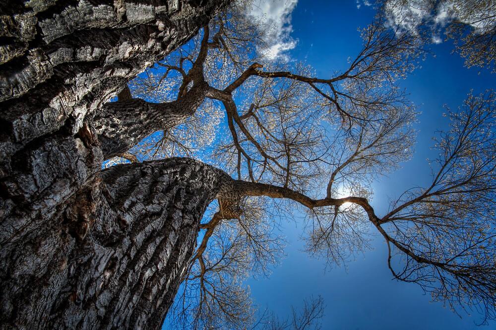 Bark and Blue by Bob Larson