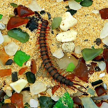 Sea glass and Centipede by kchase