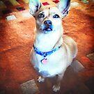 The Mighty Chihuahua by Anne  McGinn