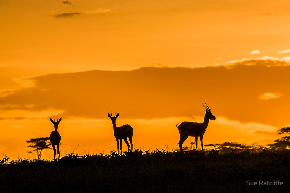Sunset in the Serengeti, Tanzania, Africa  by Sue Ratcliffe