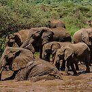 Bath Time! Lake Manyara National Park, Tanzania by Sue Ratcliffe