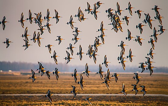 Grutto's come back home by THHoang