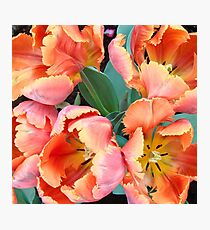 Apricot and Yellow Tulips Photographic Print