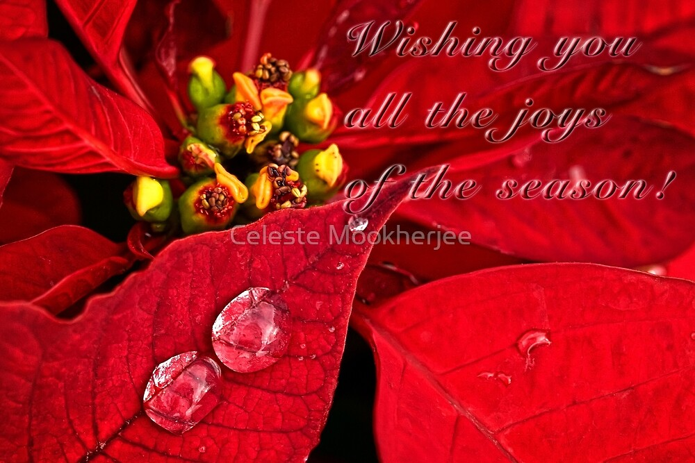 Sparkling poinsettias - card by Celeste Mookherjee