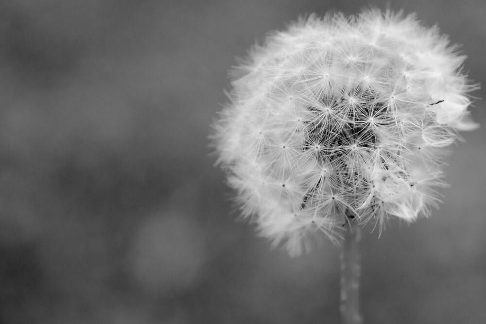 Breathless by Jennifer Saville