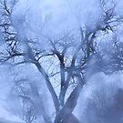 Fluffy Tree by giohugueth