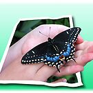 Butterfly presentation (3D effect) by Olga
