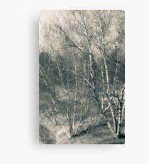 Toledo Ohio Botanical Gardens - Birch Trees Canvas Print