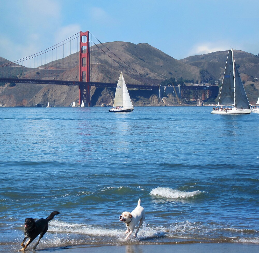Happy Dogs in the Bay Water by David Denny