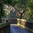 Boardwalk at Sawgrass Lake by Jeff VanDyke