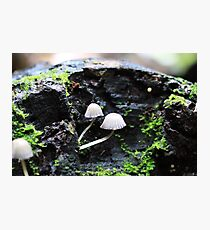 Mini world Photographic Print