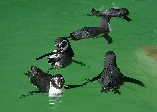 Playtime for the Penguins by AnnDixon
