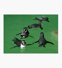 Playtime for the Penguins Photographic Print