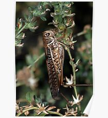 Locust Camourflaged With Garden Background Poster
