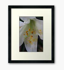 Easter Lily Macro.  Framed Print