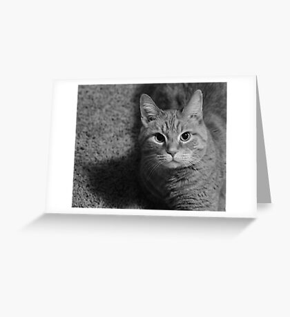 Mr. Pussy Cat  Greeting Card