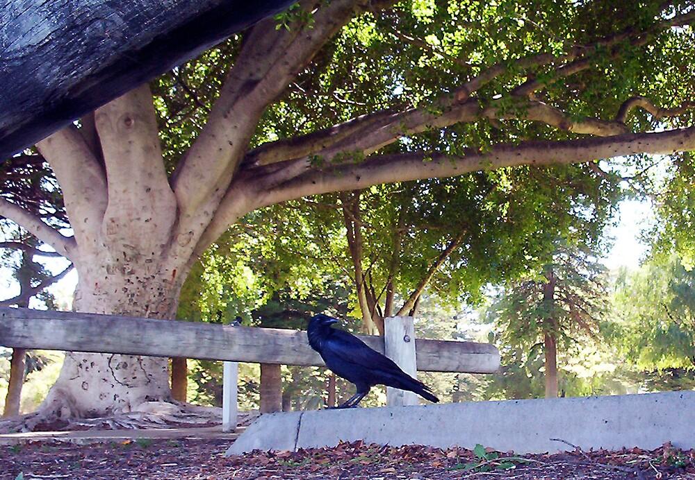 Crow - Three - 24 03 13 by Robert Phillips