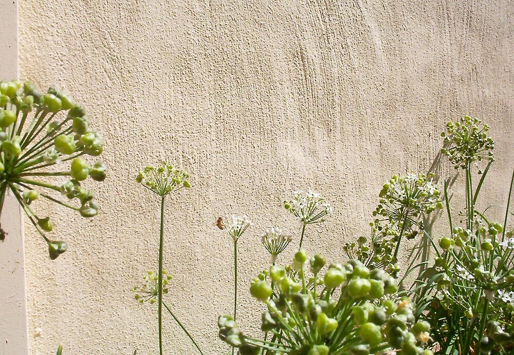 Bee - Three - 31 03 13 by Robert Phillips