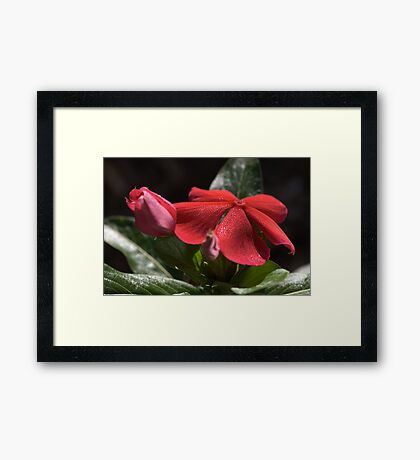 Happy in the Light Framed Print