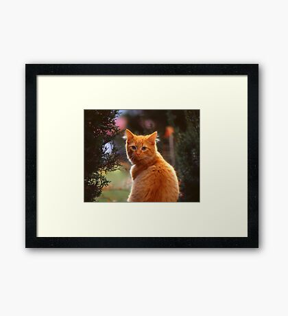 My Wife's Cat Framed Print