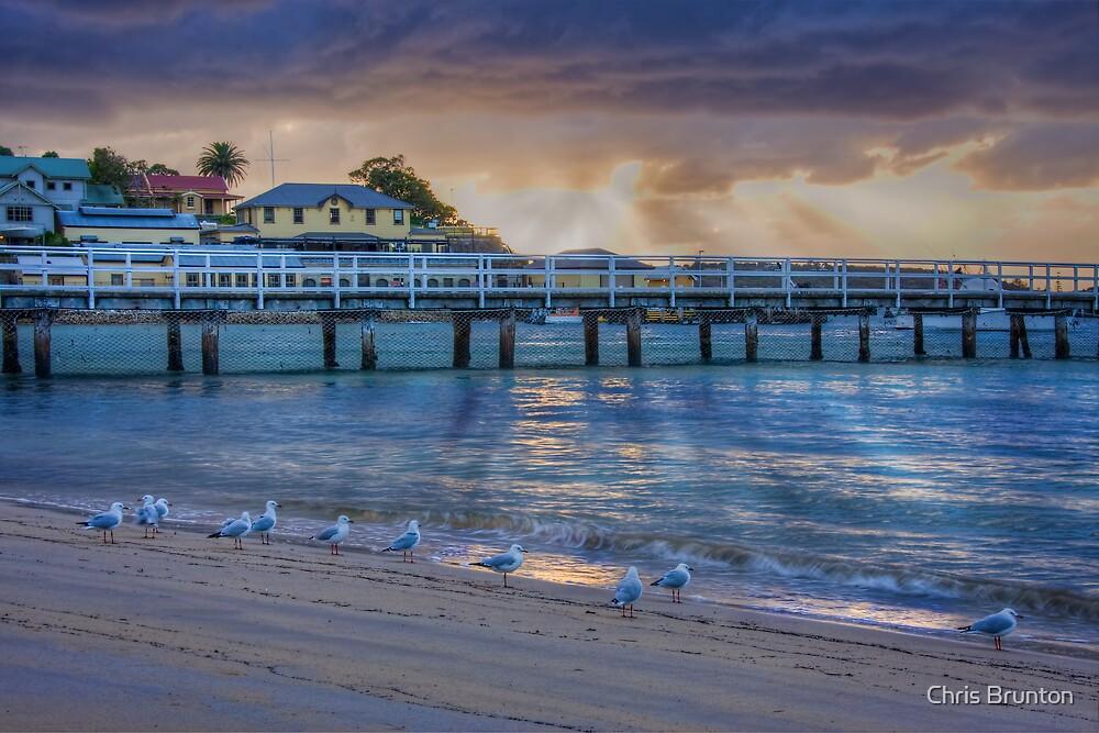 Seagulls like sunrises too by Chris Brunton