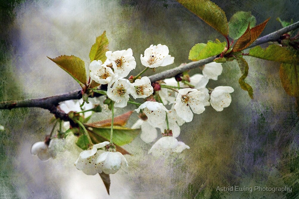 Textured Blossom by Astrid Ewing Photography