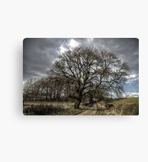 Rural Tree Canvas Print