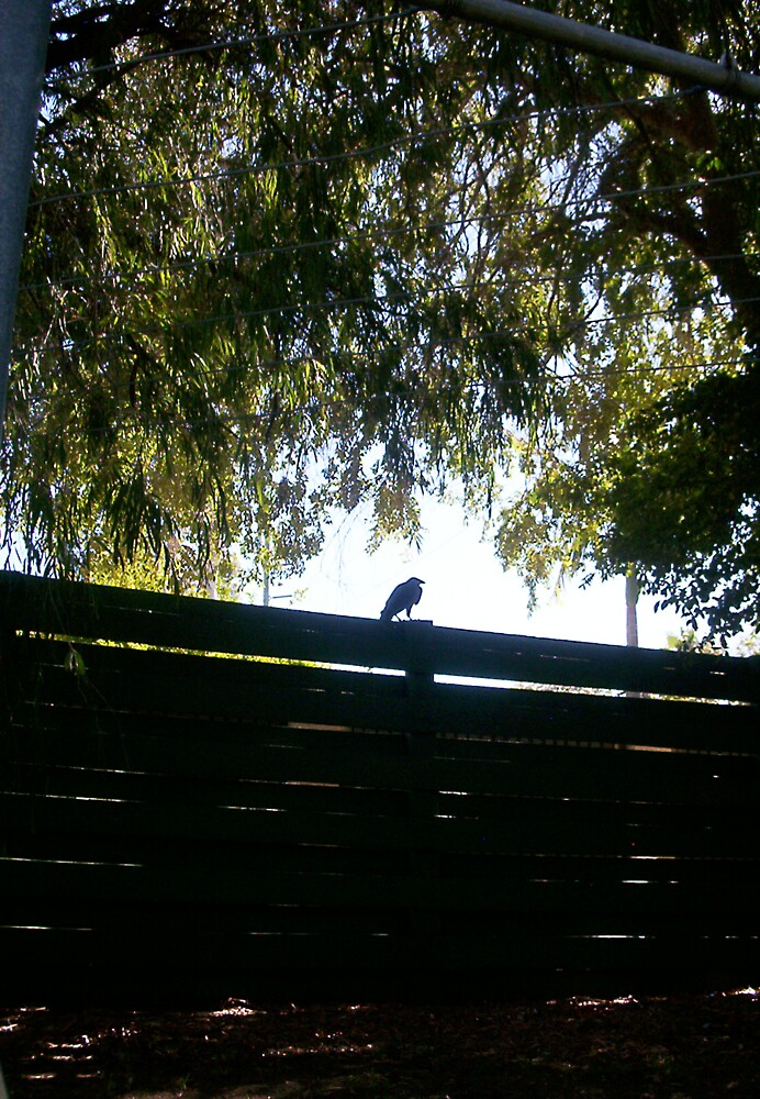Vaguely Psychic Crow Threatens The Truth - 01 04 13 by Robert Phillips