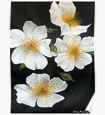 Radient Roses Poster