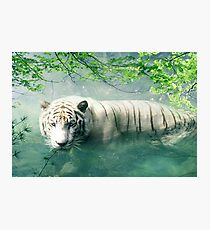 Lonely Tiger 2 Photographic Print